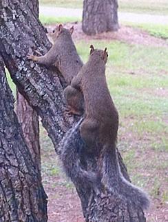 squirrels_101b0790.jpg